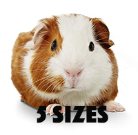 Wholesale Pets | Companion Animals | Feeders | Northwest